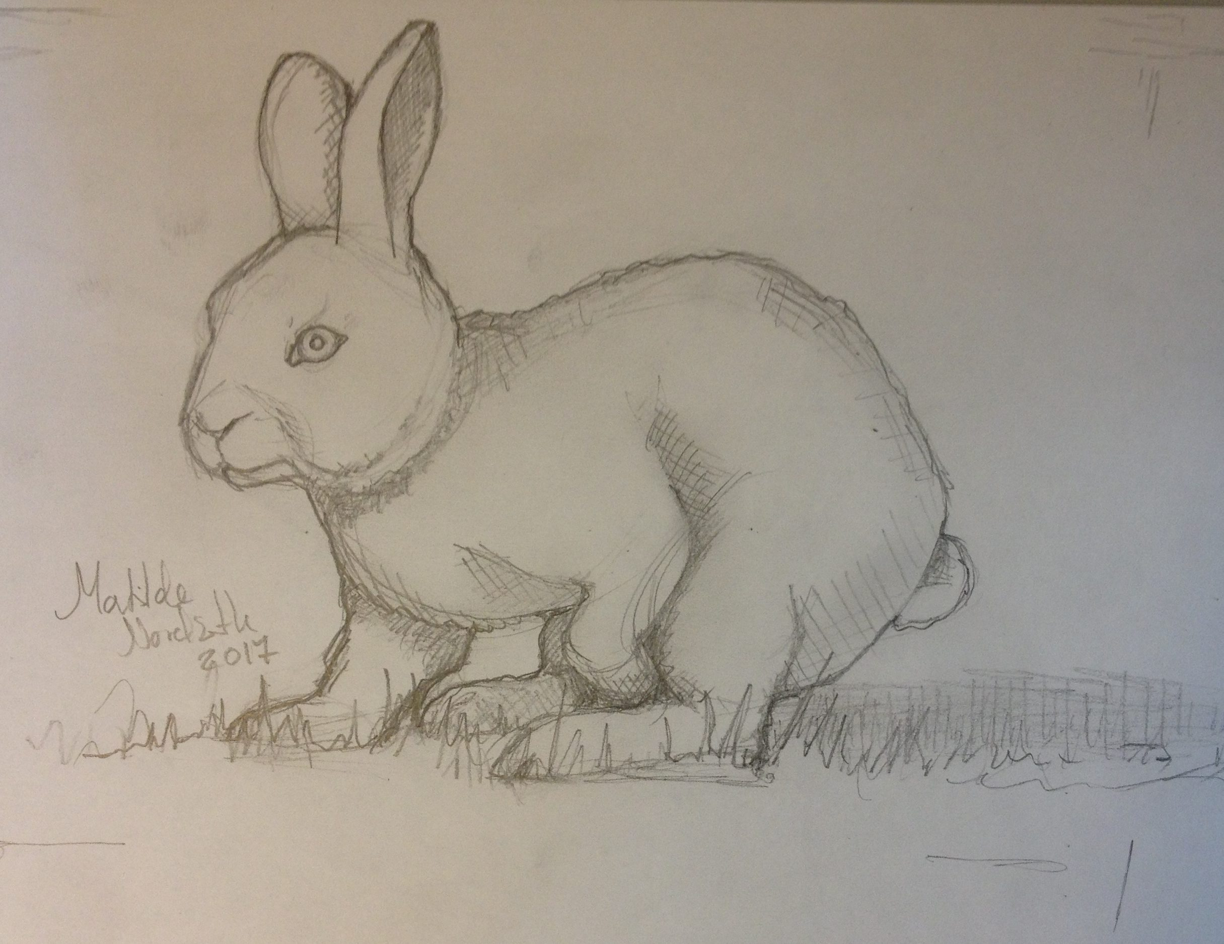 Skitse af kanin